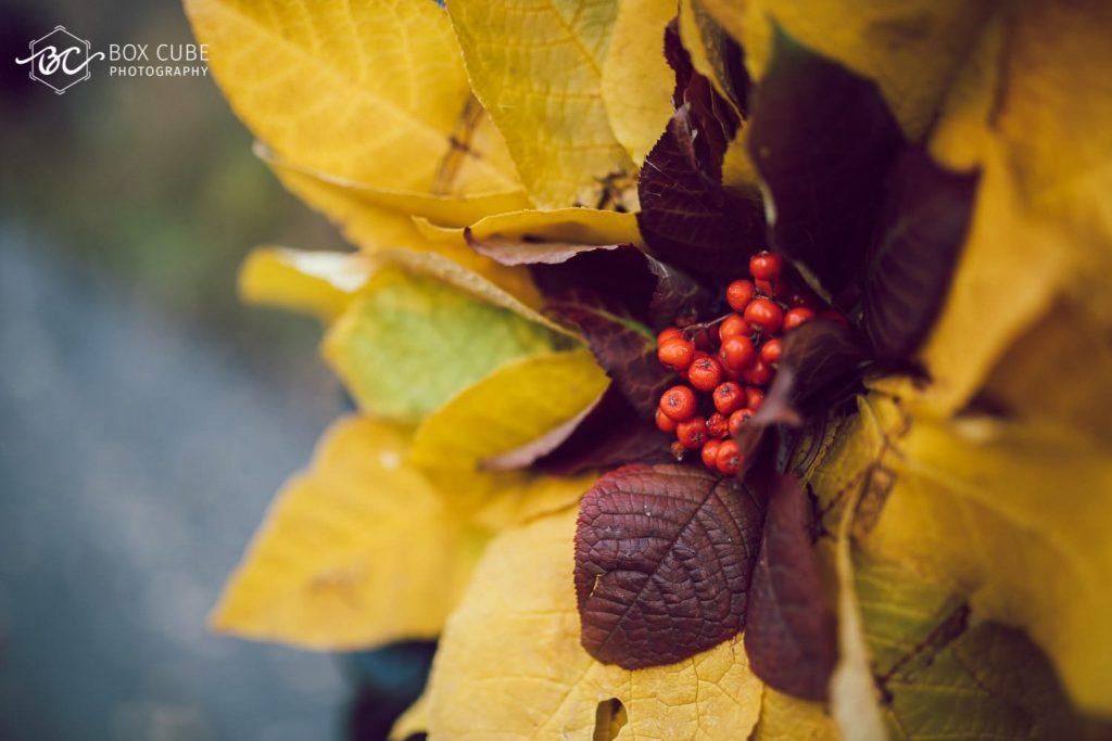 fall-portraits-edmonton-photographer-box-cube-photography-october-2016-2016